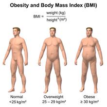 Body Mass Index Diagram