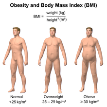 Body Mass Index Diagram